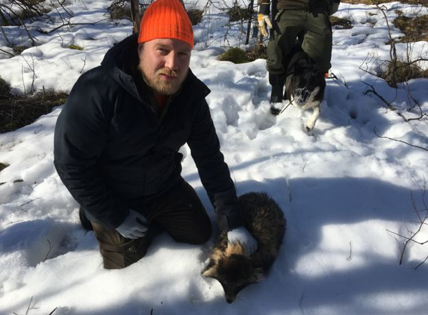 Hunter with trapped raccoon dog