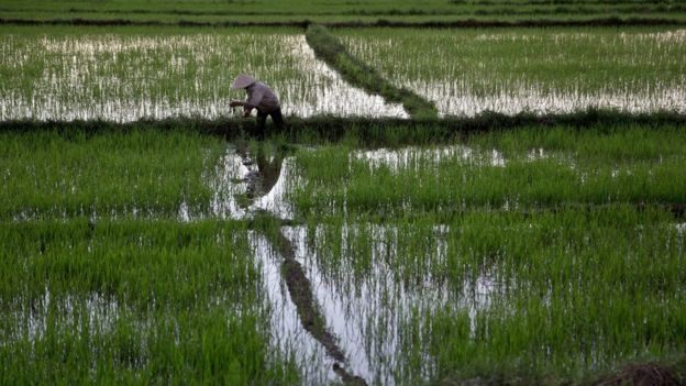 Nông dân làm ruộng ở Việt Nam
