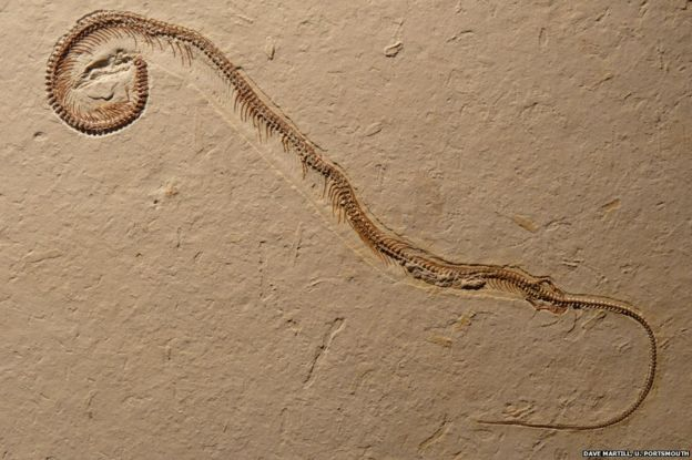 four-legged snake fossil