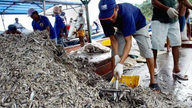 Ngư dân Phú Quốc (hình minh họa)