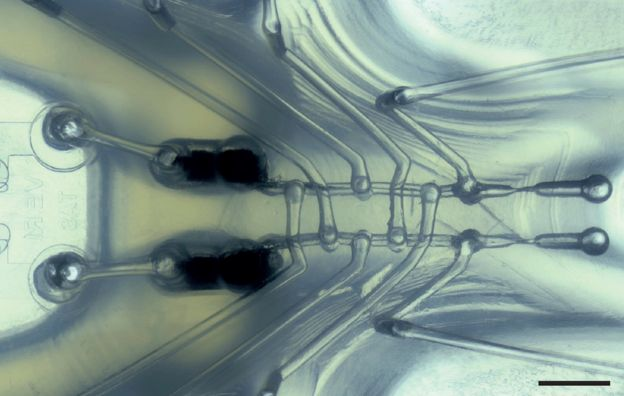 tubes inside the octobot