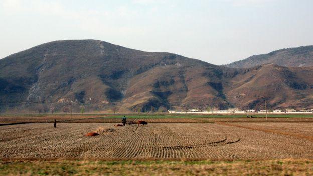 Şimali Koreyada ferma