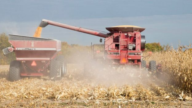 Harvest in Iowa, US