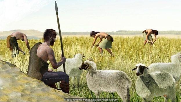 İnsanın tarıma başlaması vücutta önemli değişikliklere neden oldu.