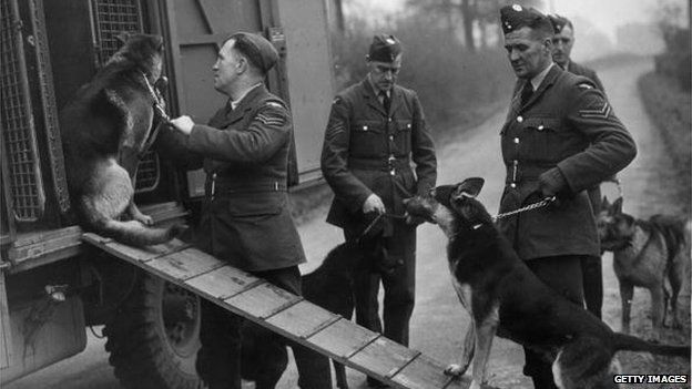 2nd December 1944: German Shepherd dogs being loaded into a van by their RAF handlers. They were used to sniff out people buried in bombing attacks