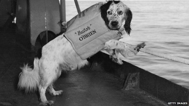 Butch O'Brien, a spaniel mascot of the US navy on board his ship in the Sea of Japan.