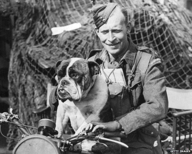 A despatch rider in a Quebec regiment gives a lift to the regimental mascot, a British bulldog. The regiment is on invasion practice exercises in England.