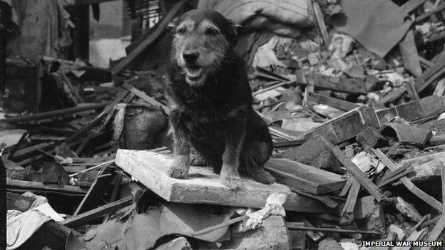 Rip was found as a stray and helped locate many victims of the air-raids of The Blitz, He was awarded a Dickin medal in 1945