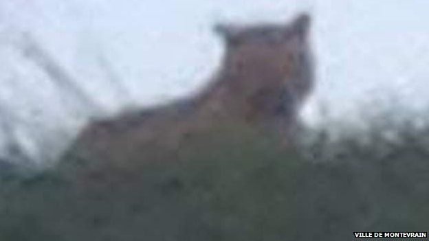 The amateur picture of the tiger reportedly on the loose near Paris