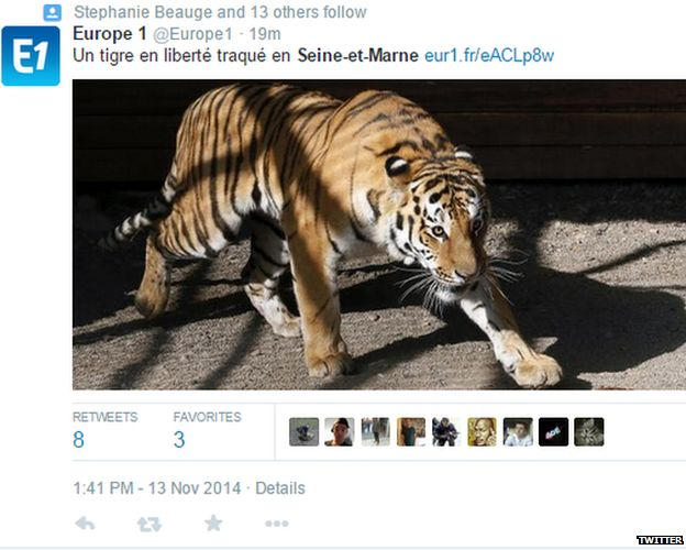 Not the tiger