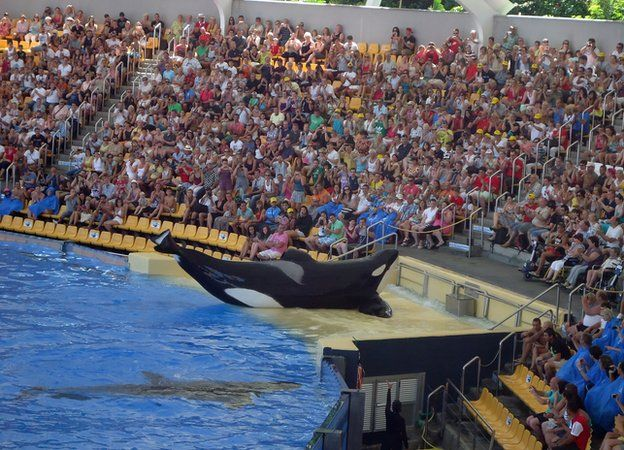 Orca performing to a large crowd