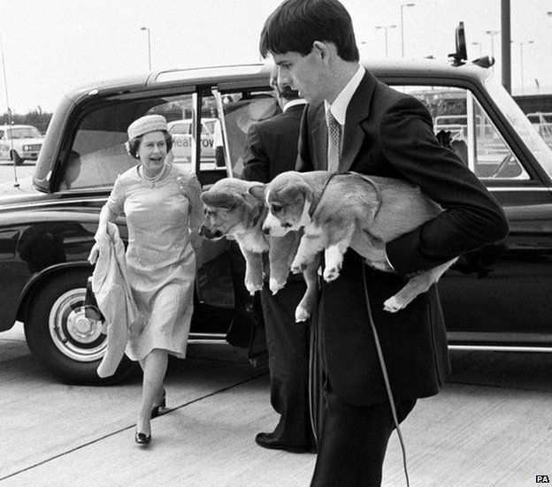 Corgi puppies being carried on to a flight in 1981