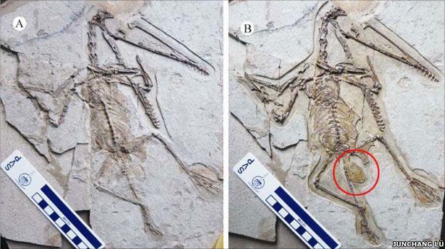 Fossil (JUNCHANG LÜ)