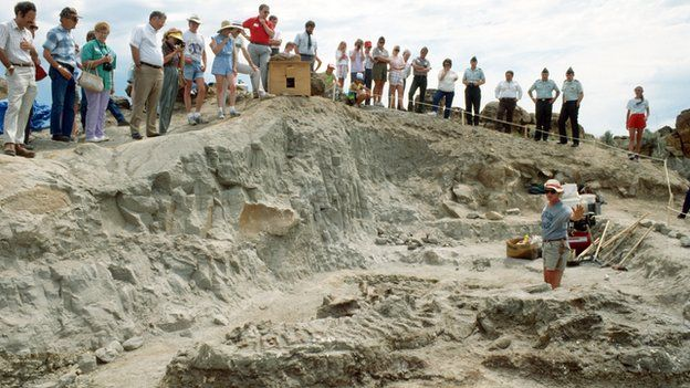 Gallery images and information: Tyrannosaurus Rex Fossil In Ground