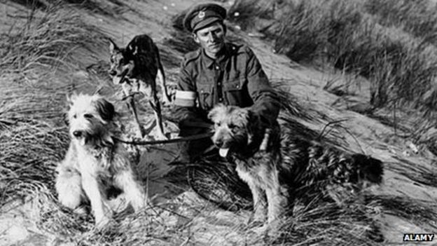 A WW1 soldier with messenger dogs