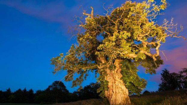 scottish tree of the year finalists announced