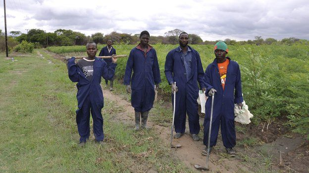 Moringa farm employees