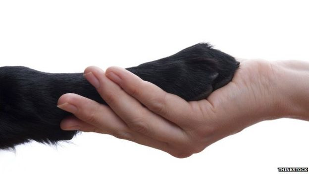 a guide dogs paw held in a hand