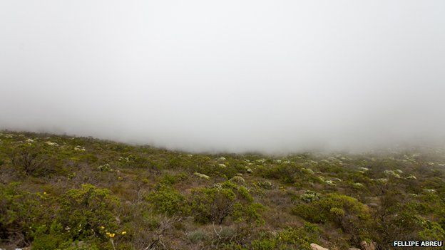 Fog in the Chilean hills