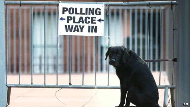 Dog outside a polling station