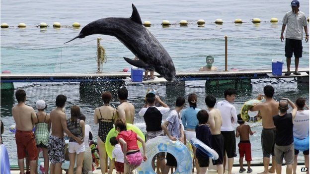 A dolphin at an aquarium in Taiji, Japan (2010)