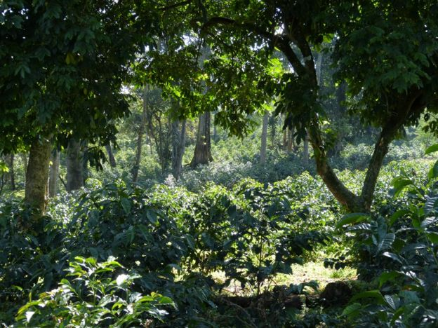 Ethiopian forest