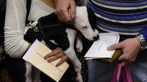 A dog is held by its owner voting in Spain's local elections