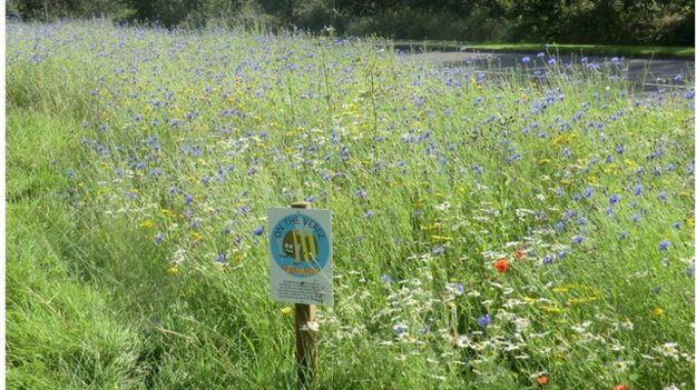 Strips of land on farms or road verges planted with flowers can boost bee numbers