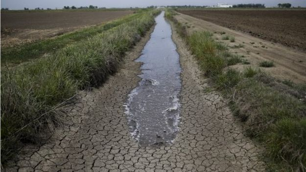 In this May 1, 2014, file photo, irrigation water runs along a dried-up ditch between rice farms to provide water for the fields in Richvale, California.