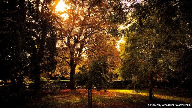 Autumnal trees with the sun behind