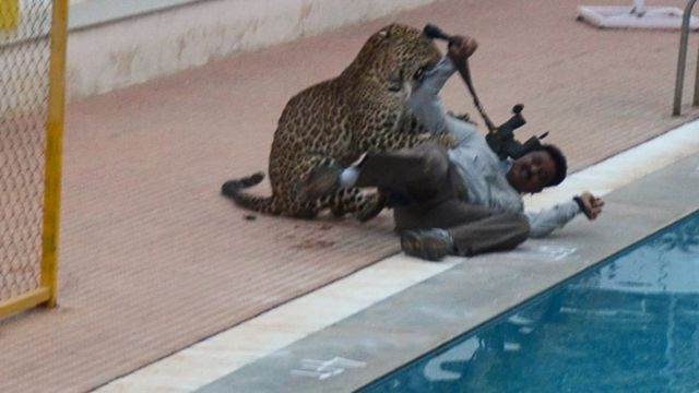 India School Attack Leopard Escapes From Enclosure Bbc News