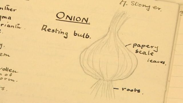 A page from Mona Stonyer's science book