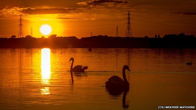 Swans on a lake at sunset