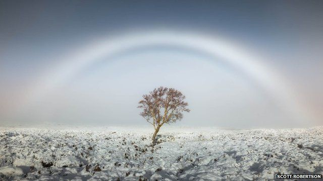 Fogbow over a tree