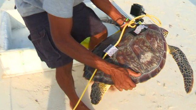Turtle with 'turtlecam' attached