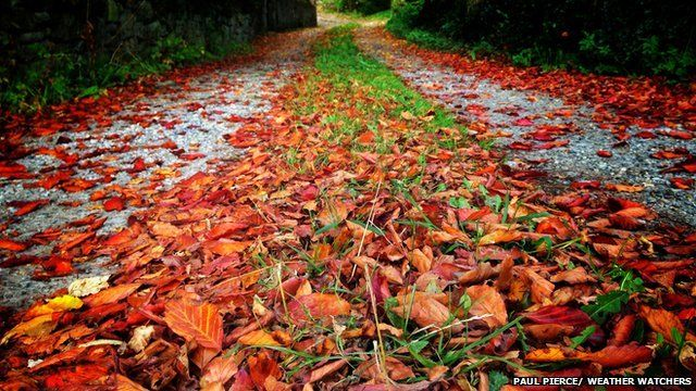 Red leaves on stony path