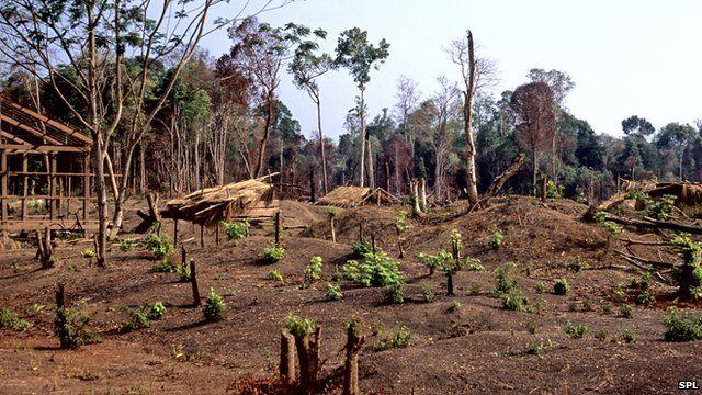 Alarm over Cambodia 'timber grab'...