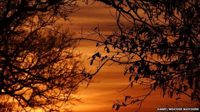 Red sunrise through trees