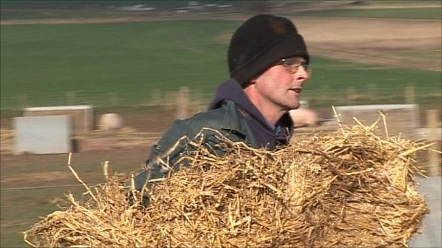 Camerin Naughton carries hay