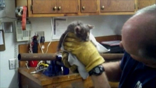 Kitten freed from pipe