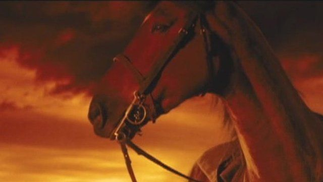 Horse in the film War Horse