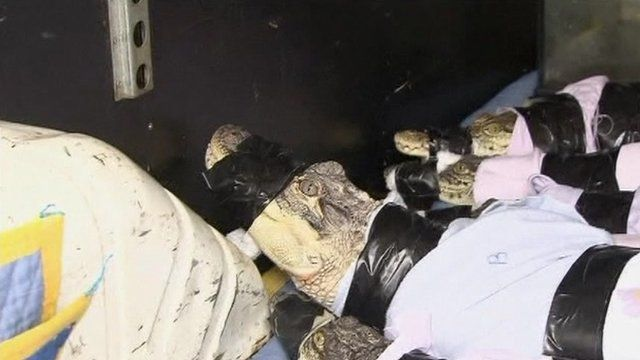 Reptiles in a van