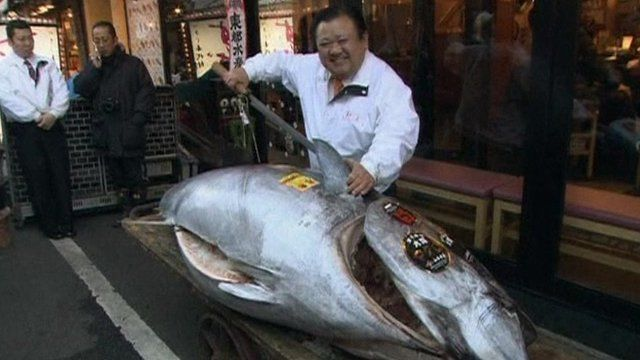 Japan tuna is world 39 s most expensive edible fish bbc news for Most expensive fish in the world