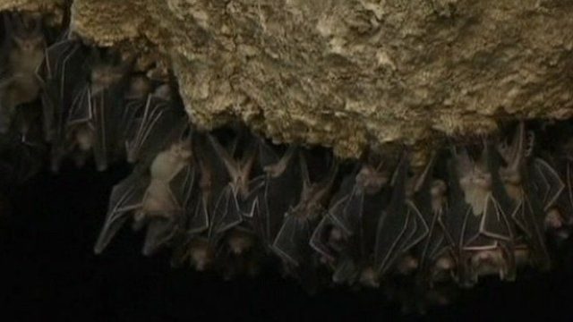 Bats at the Monfort sanctuary
