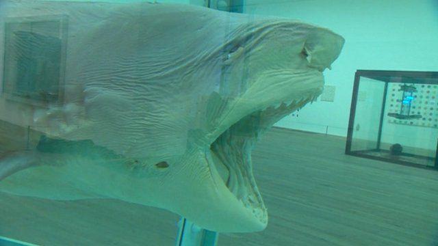 A shark in formaldehyde