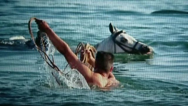 A horse being rescued