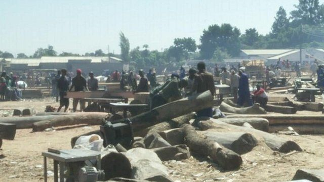Zambians cutting trees for timber