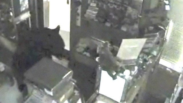 Surveillance video from Rocky Mountain Chocolate Factory shows the black bear