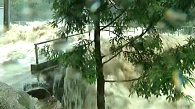 Water flowing past tree