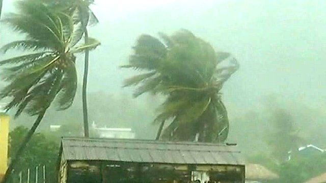 Tropical storm Isaac batters palm trees